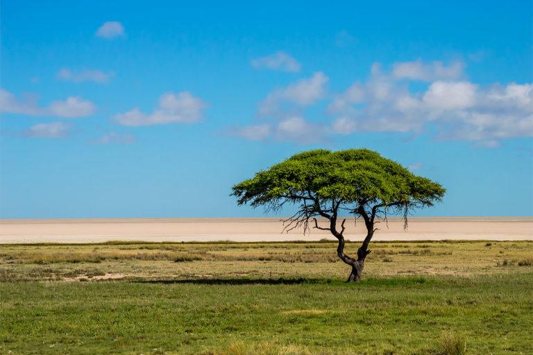 etosha pfanne namibia