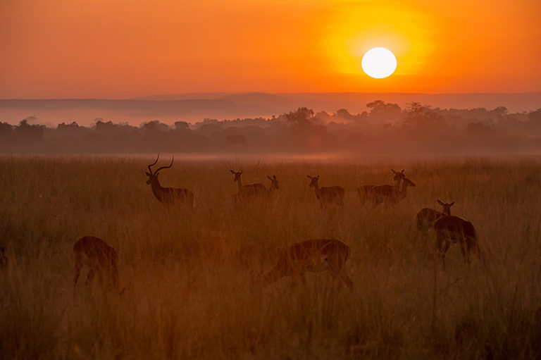 Fotosafari Kenia,Sonnenaufgang, in der Savanne Afrikas,