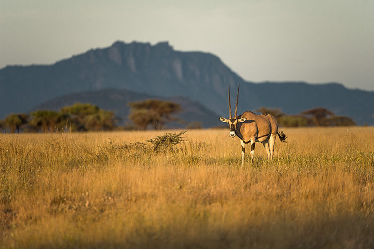 Fotoreise Kenia, Samburu Nat.-Park