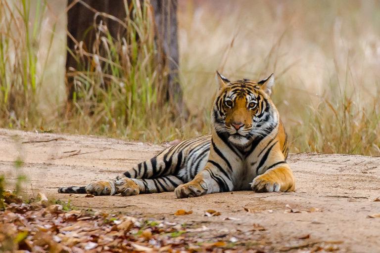 Fotoreise, Tigersafari zu den Bengaltigern in Ranthambhore in Indien