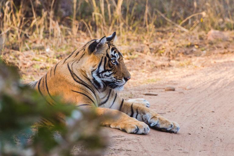 Fotoreise zu den Bengaltigern in Indien mit Photofascination.ch, fotoreise