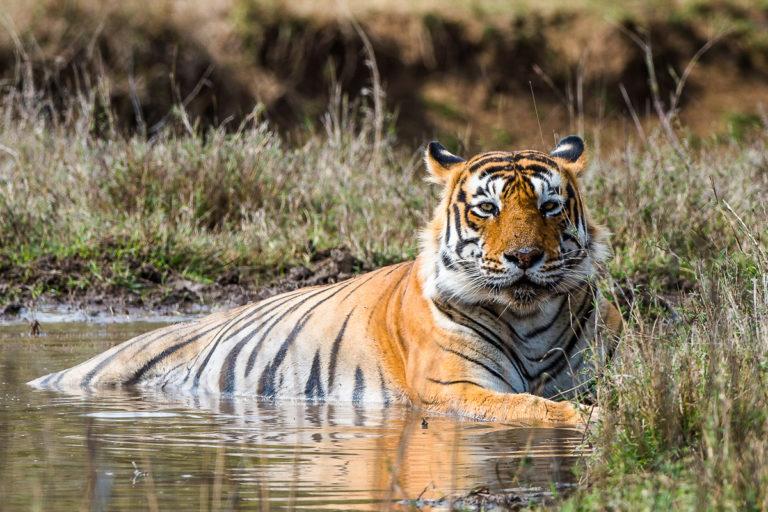 fotoreise zu den Bengaltigern in Indien mit photofascination.ch