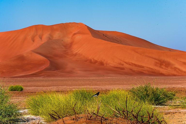 Riesige Dünen, die grössten der Welt, Oman