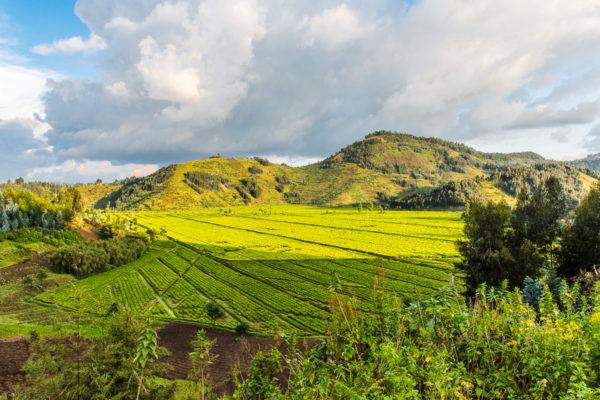 Virunga,Vulkane, Fotoreise Uganda, Afrika