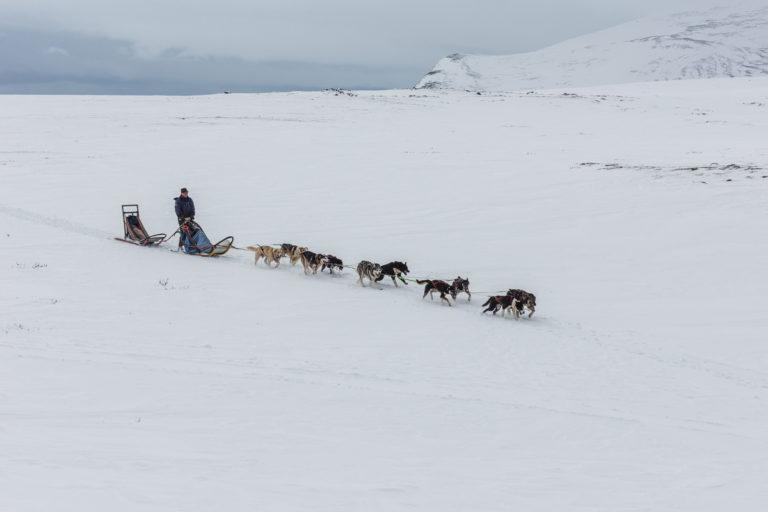 Schlittenhundefahrt auf der Moschusochsen Fotoreise