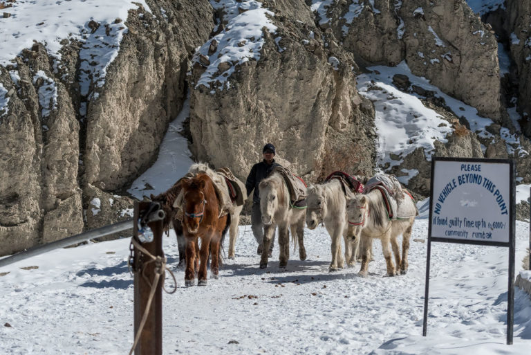 Ponys für Materialtransport, Rumbak Valley, Fotoreise Schneeleoparden