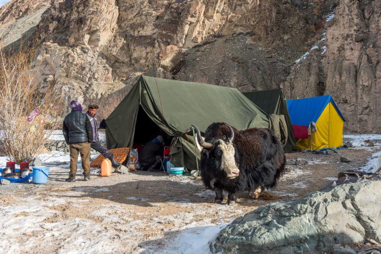 Fotoreise Schneeleoparden, Campsite