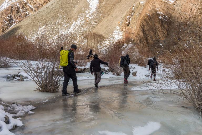 Fotoreise, Schneeleoparden Ladakh