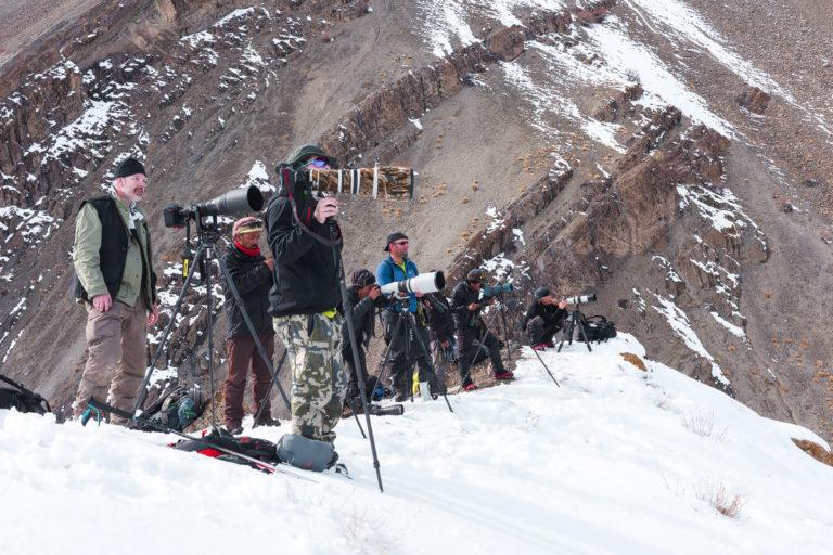 Schneeleoparden fotografieren in Ladakh im Winter