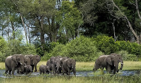 Elefantenherde, Elefanten am Fluss, Fotoreise, Uganda