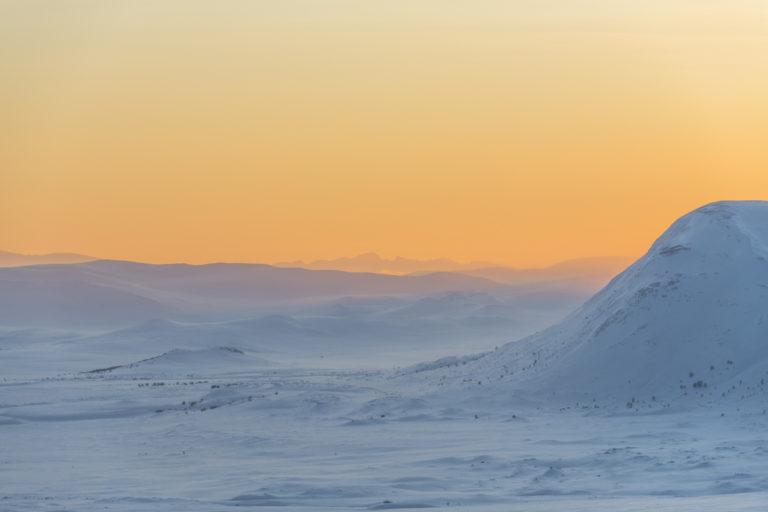 Fotoreise zu den Moschusochsen im Dovrefjell