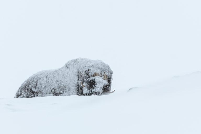 Energiesparen im Winter und Schneesturm