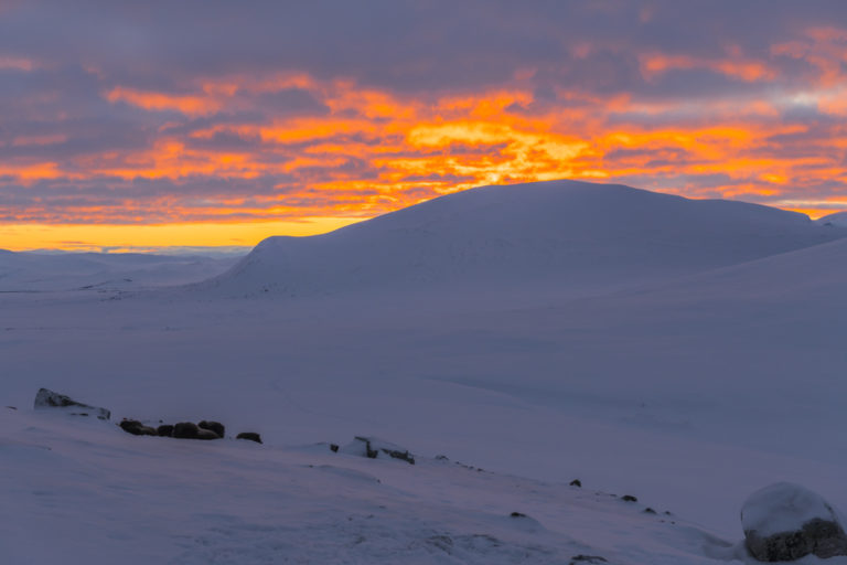 Sonnenuntergang mit Moschusochsen, und die Kälte kommt