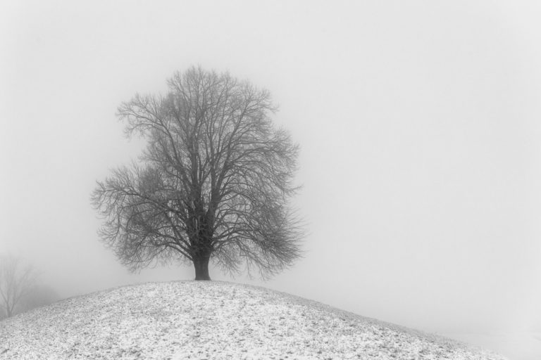 Stolzer Baum auf dem Hirzel