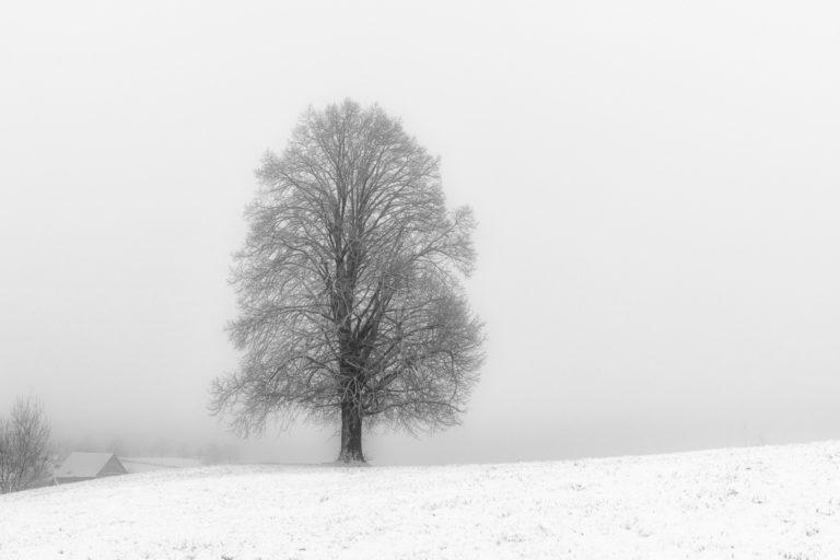 Winter bei den Hirzel-Drumlins