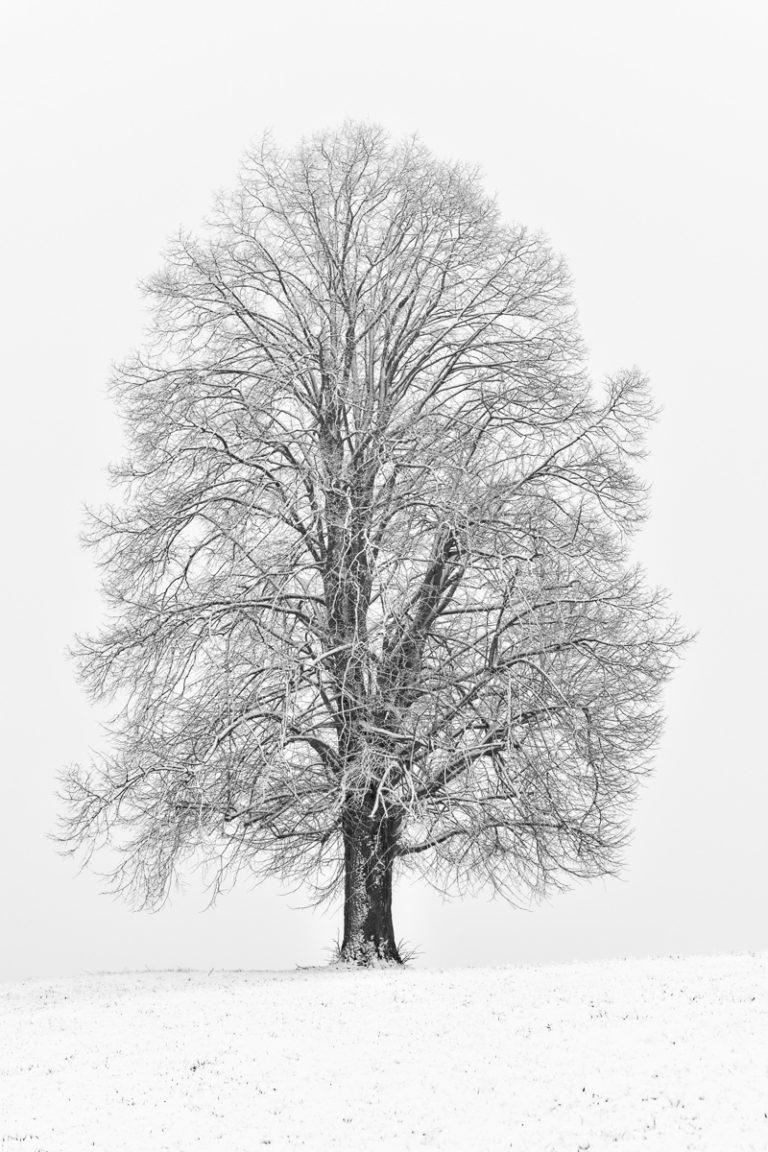 Hirzel Drumlins, fotografiert im Winter