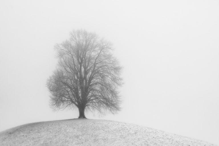 Hirzel-Drumlins, tief im Winter