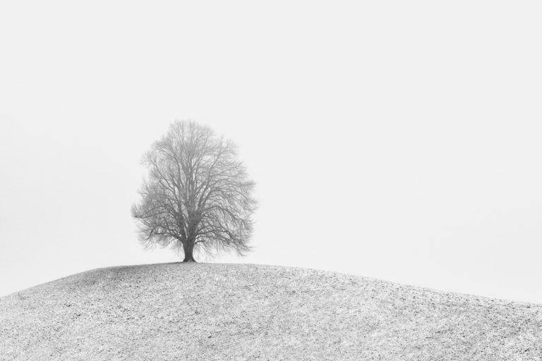 Winterlandschaft mit Linde