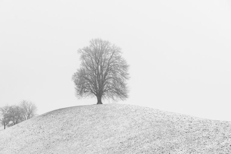 Hirzel-Drumlins, allein auf dem Hügel