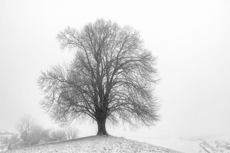 Lindenbaum im Winter, Hirzel-Drumlins
