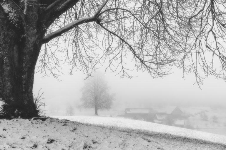 Durchblick im Nebel auf dem Hirzel