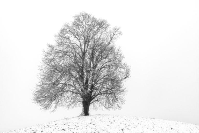 Einsame Linde im Winter, Hirzel-Drumlins