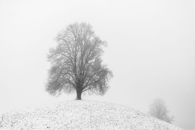Einsamer Baum im Winter, Hirzel-Drumlins