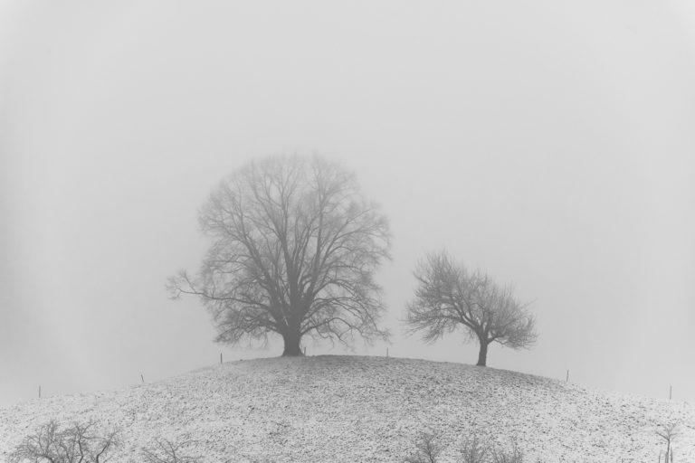 Baeume im Winterkleid, auf dem Hirzel