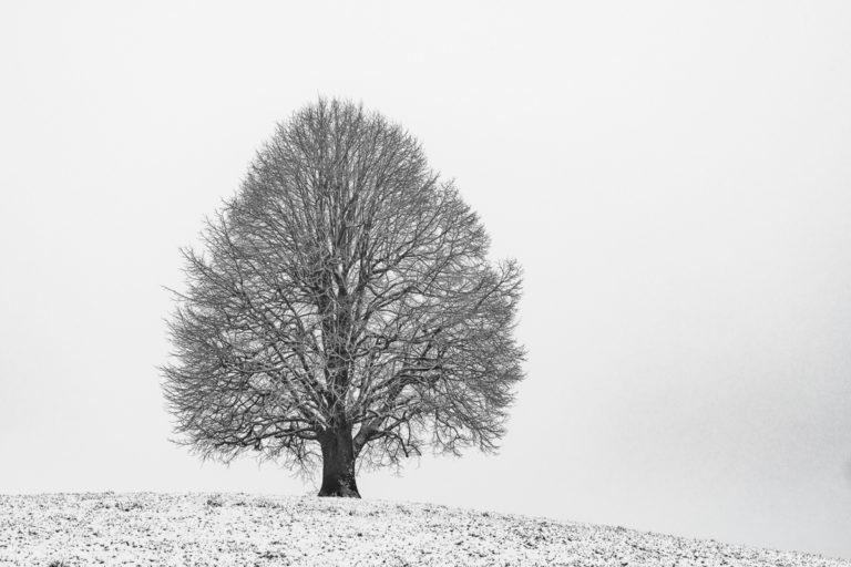 Winter, Hirzel-Drumlins