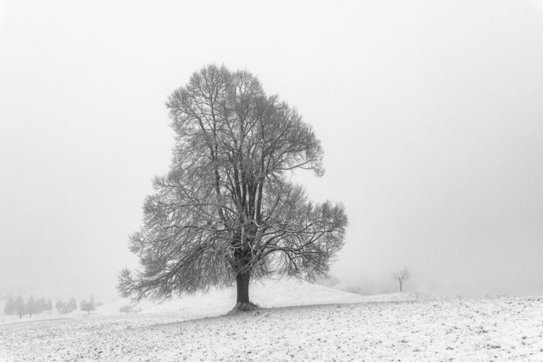 Lindenbaum auf dem Hirzel in Winterlandschaft