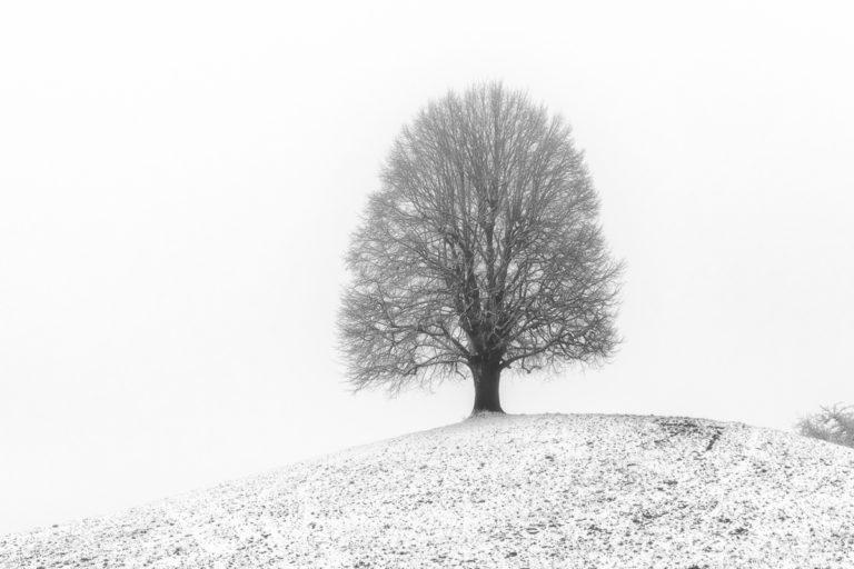 Hirzel, Linde im Winter