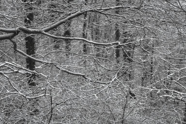 Winterwald mit Buchen im Schnee