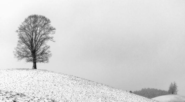 Winterlandschaft auf dem Hirzel, verschneite Baeume