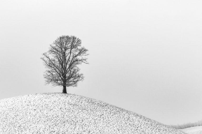 Hirzel,Drumlins im winter