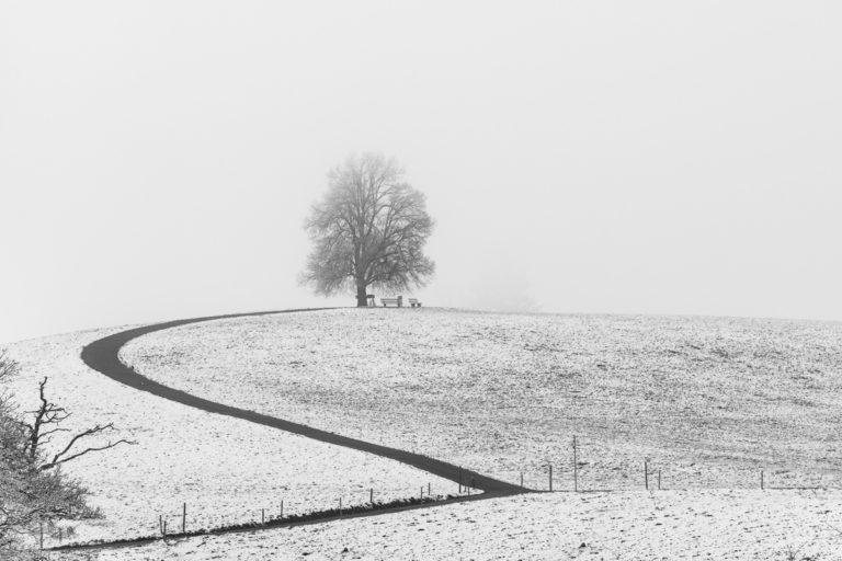 Winter, Hirzel,Drumlins,Baum