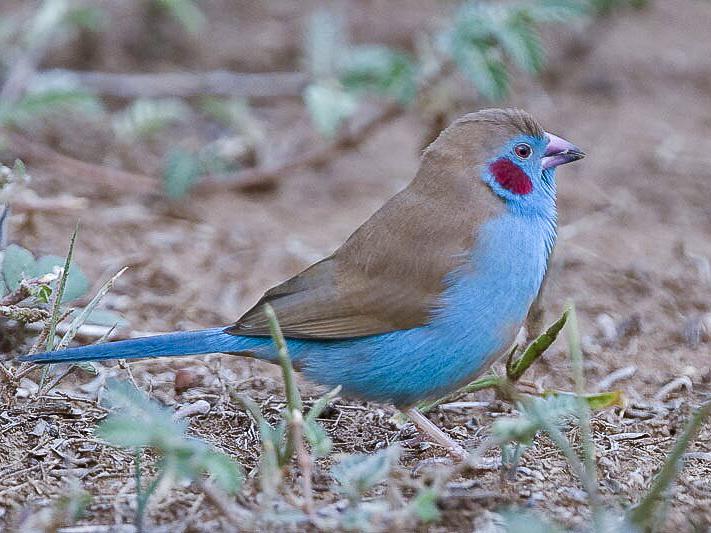 Vogelbeobachtungen auf der Fotoreise Uganda