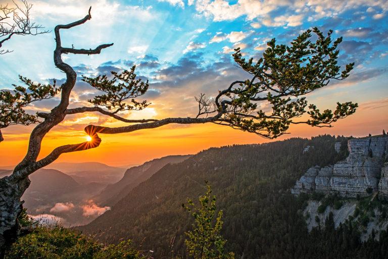 Sonnenaufgang im Jura, Creux du Van, Jura, Baum