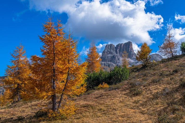 Dolomiten Goldene Lärchen Falzarego Italien
