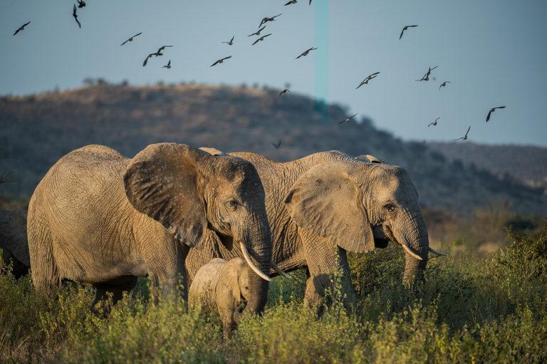 Fotoreise Kenia, Elefanten auf Wanderung