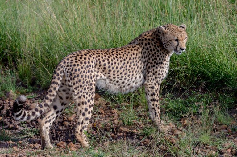 kenia 33