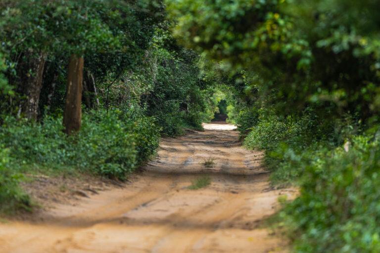 wildlife sri lanka wilpattu nationalpark