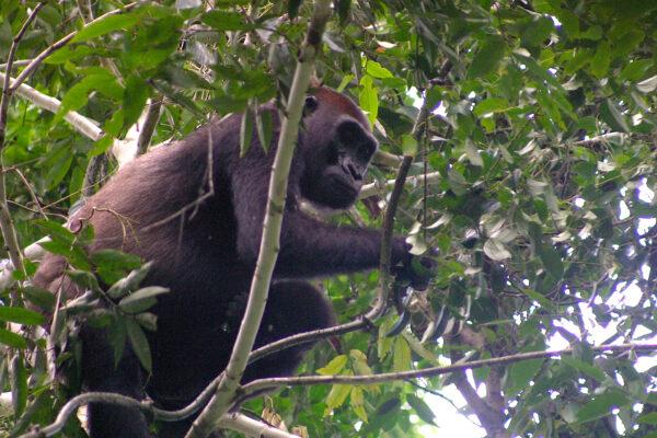 wildlife sri lanka bienenfresser