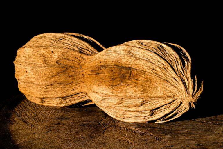 spanisches nuessli eichenholz